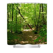 Wooded Path 17 Shower Curtain