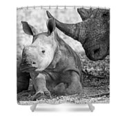 Rhino And Baby Shower Curtain