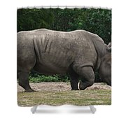 Rhino In The Wild Shower Curtain