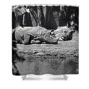 Rhino Nap Time Shower Curtain
