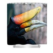 Rhinoceros Hornbill  Shower Curtain by Ernie Echols