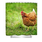 Rhode Island Red Chicken Shower Curtain