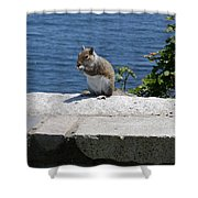 Rhode Island Squirrel Shower Curtain