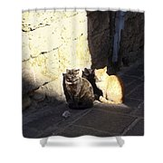 Rhodes Cat Trio Shower Curtain
