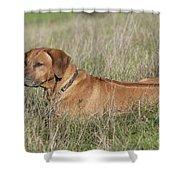 Rhodesian Ridgeback Dog Shower Curtain