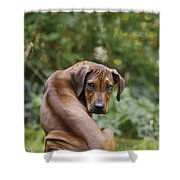 Rhodesian Ridgeback Puppy Shower Curtain