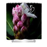 Rhododendron Begining Shower Curtain