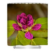 Rhododendron Bud Shower Curtain