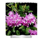 Rhododendron Closeup Shower Curtain