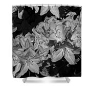 Rhododendron Heaven In Black And White Shower Curtain