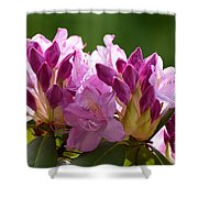 Rhododendron II Shower Curtain