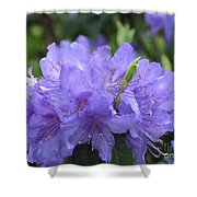 Rhododendron Impeditum Shower Curtain
