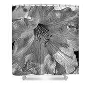 Rhododendron In Black And White Shower Curtain