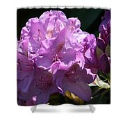 Rhododendron In The Morning Light Shower Curtain