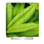 Rhododendron Leaves Shower Curtain