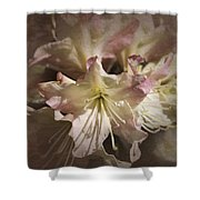 Rhododendron Mary Fleming Shower Curtain
