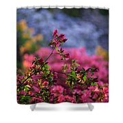 Rhododendron Pink Dream Shower Curtain