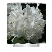 Rhododendron Purity Shower Curtain