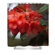 Rhododendron Sonata Shower Curtain