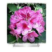Rhododendron Square With Border Shower Curtain