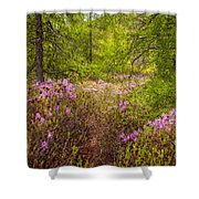 Rhodora Bloom In Acadia Shower Curtain