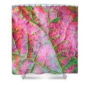 Rhubarb Riot Map Shower Curtain