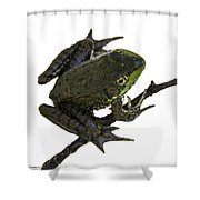 Ribbeting Frog In A Bucket Shower Curtain