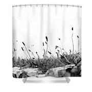 Ribwort Plantain Shower Curtain