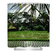 Rice Fields Bali Shower Curtain