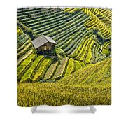 Rice Fields Terraces Shower Curtain