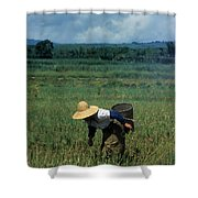 Rice Harvest In Southern China Shower Curtain