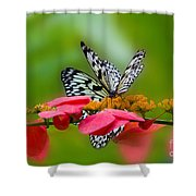 Rice Paper Butterflies Shower Curtain