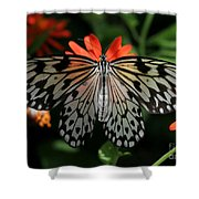Rice Paper Butterfly Elegance Shower Curtain