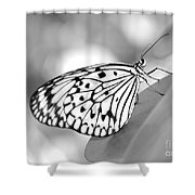 Rice Paper Butterfly Resting For A Second Shower Curtain