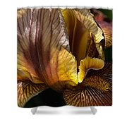 Rich Iris Shower Curtain