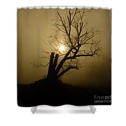 Richmond Park 12 Shower Curtain