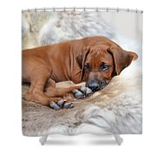 Ridgy Daydream Shower Curtain