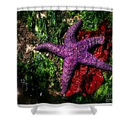 Right At Home Shower Curtain