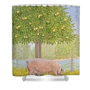 Right Hand Orchard Pig Shower Curtain