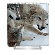 Right Of Passage Shower Curtain by Sandra Bronstein