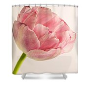 Rilly Frilly II Shower Curtain