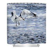 Ring-billed Gull Shower Curtain