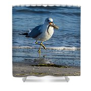 Ring-billed Gull With Its Catch Shower Curtain