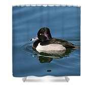 Ring Neck Duck  Shower Curtain