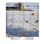 Ring Neck Hens Escape Shower Curtain