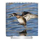 Ring-necked Duck Landing Shower Curtain