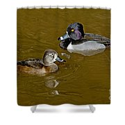 Ring-necked Duck Pair Shower Curtain
