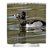 Ring-necked Duck Swallowing Snail Shower Curtain