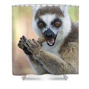 Ring-tailed Lemur Cracking Seed Pod Shower Curtain