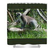Ring Tailed Lemur Shower Curtain